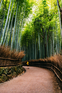 BertrandBernager_Japon_Site-1329.jpg