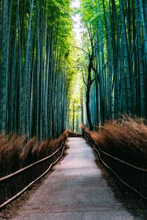 BertrandBernager_Japon_Site-1232.jpg