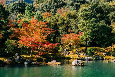 BertrandBernager_Japon_Site-1454.jpg