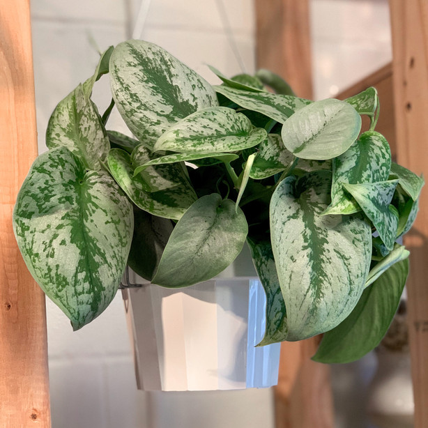 Click for house plant gallery