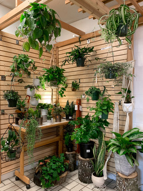 Variety of hanging plants