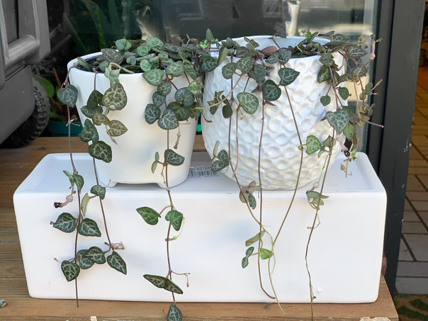 String of Hearts