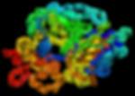 Fibronectin coating protocol