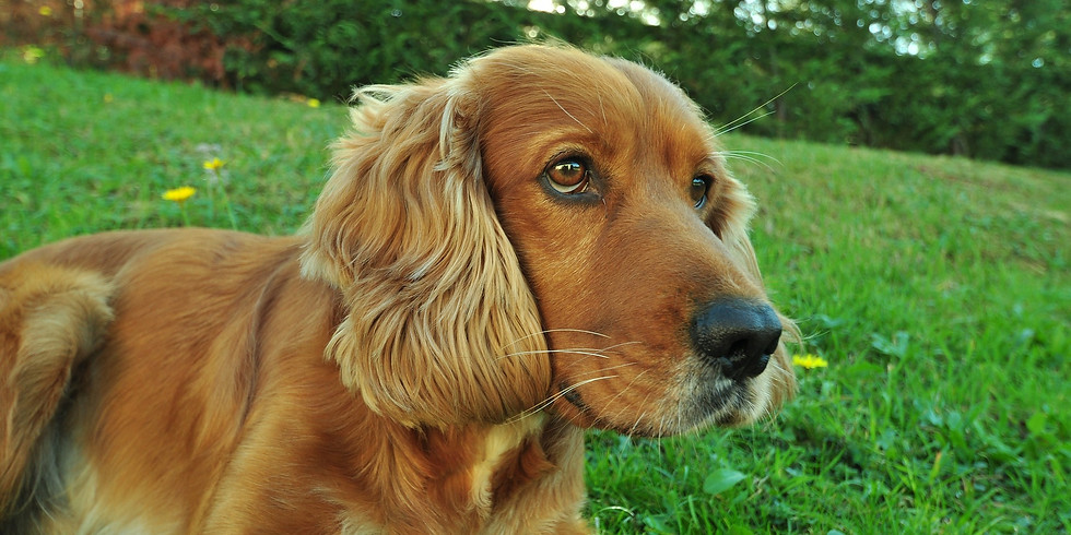 Hundar i slottsparken