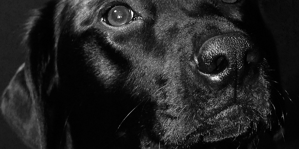 Labrador-träff