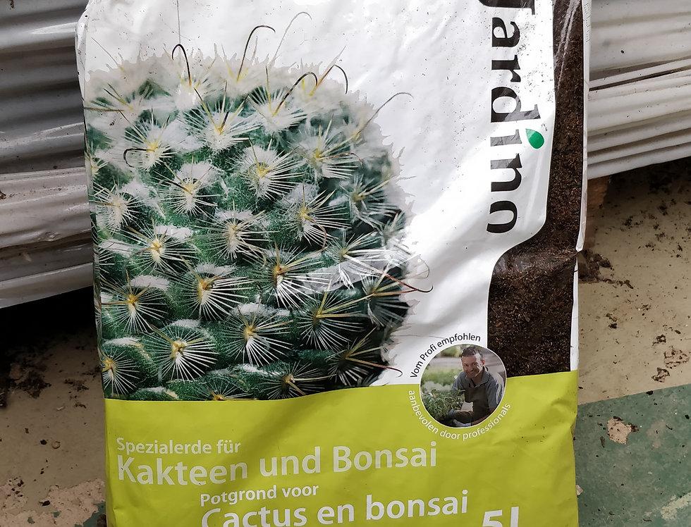 Compost Cactus 5Lt