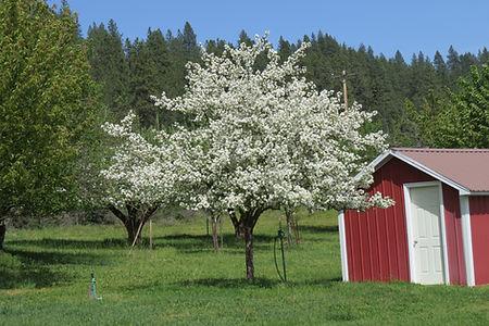 David spring tree 051319 (2).JPG