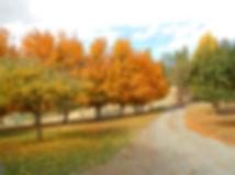 land_fairview_fall.jpg