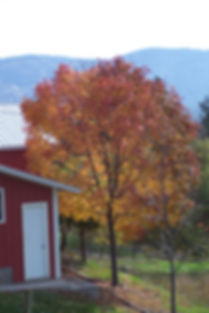 land_apurpleash_fall.jpg