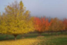 land_filbert_fruit.jpg