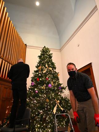 David and Mark and a Tree