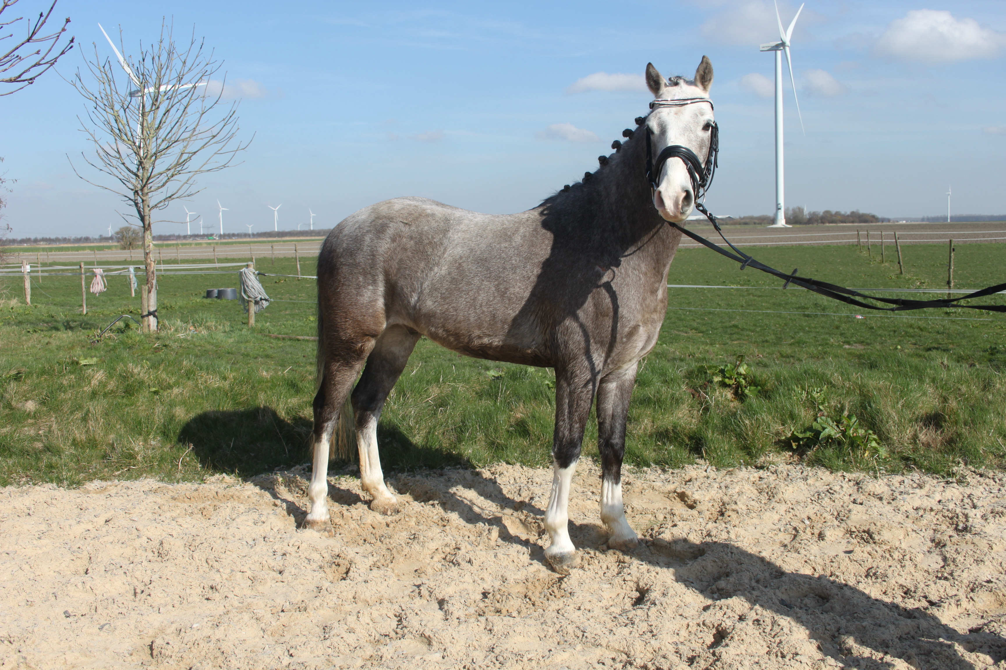 Anna's paarden