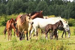 Paarden van destoeterij Zonnehoeve