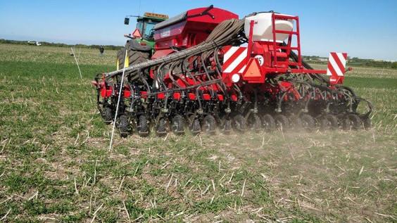Projekt: Kan efterafgrøder bekæmpe græsukrudt?