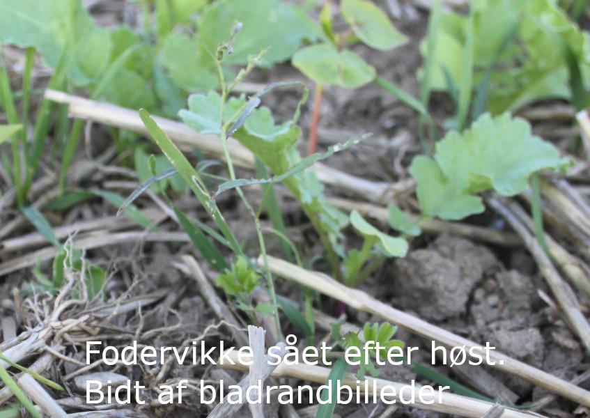 200910_vikke_bidt_(6)_klip2