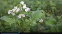 FRDK Blomsterbrak kan stadig bestilles til forårslevering