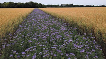 TerraHorsch: Gavnlige effekter af øget biodiversitet i sædskiftet