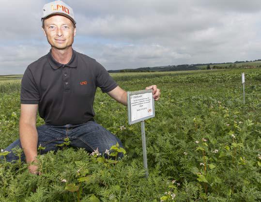 Planteavlskonsulent Kasper Holm Kristensen i demoparcellerne med efterafgrøder, som alle blev sået  9. maj 2016. Dette og de øvrige billeder er alle taget  17. juni - altså 35 dage efter såning. Den ene halvdel af alle parceller har fået 40 kg N pr. hektar som startgødning