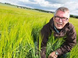 Efterafgrøder sås inden høst