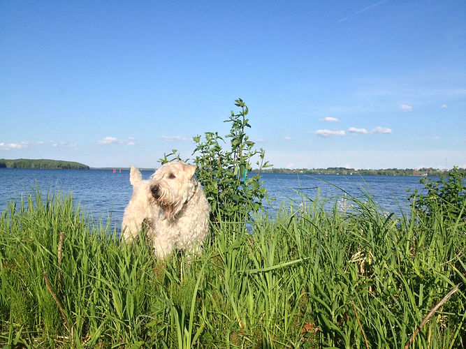 Photo of dog along grassy shore of lake in Westport Harbour