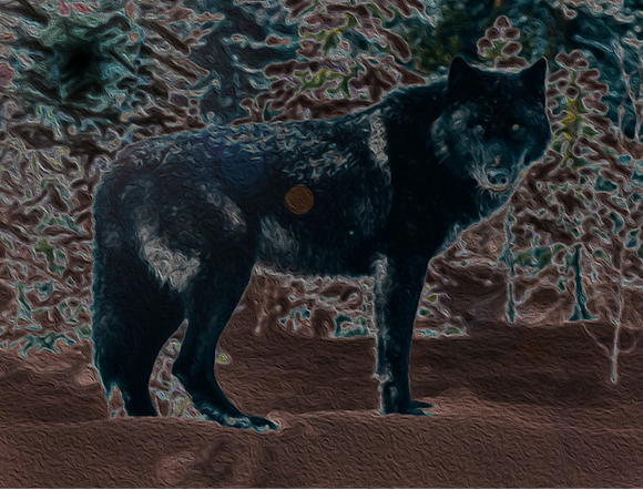 black%20wolf_edited.png