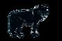 black_wolf_jasper_circa_1983-2_1024x1024