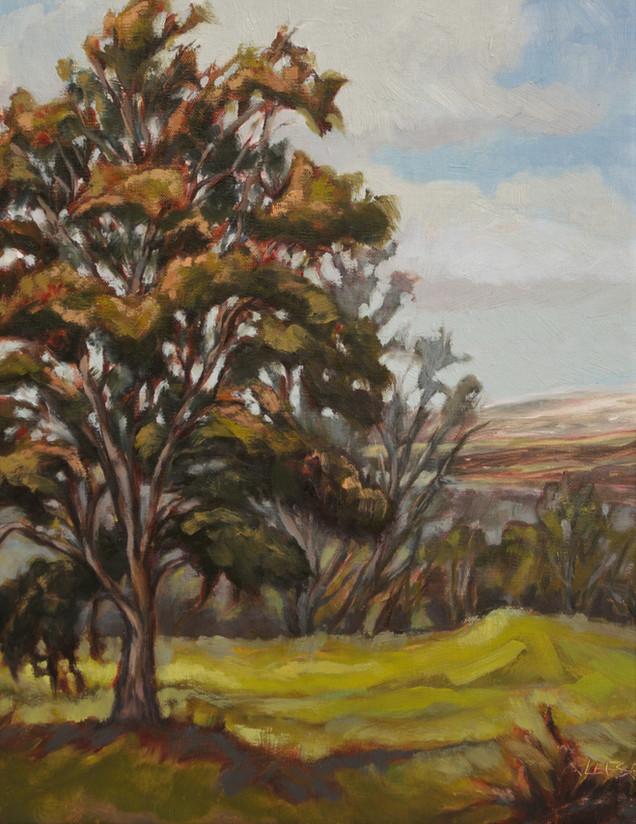 Ohi'a Tree, Kahuku Unit