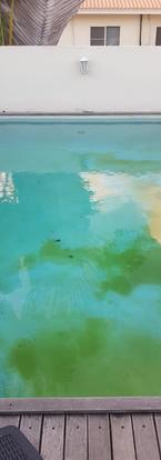 algen groei probleem bestrijden zwembad