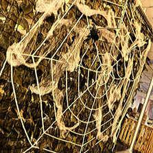 halloween spiders web.JPG