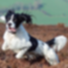 derwent_valley_gundogs