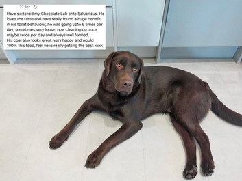 Have switched my Chocolate Lab onto Salubrious. He loves the taste and have really found a huge benefit in his toilet behaviour, he was going up to 6 times per day, sometimes very loose, now cleaning up once maybe twice per day and always well formed. His coat also looks great, very happy and would recommend 100% this food, feel he his really getting the best xxxx