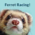 ferret racing