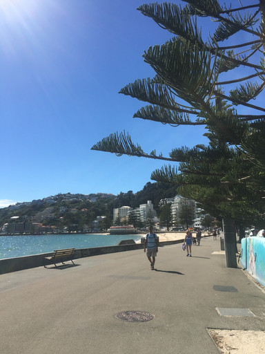 pros and cons about New Zealand Working holiday