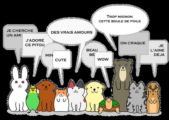 vente d'animaux chiens et chats chez Animal Expert St-Bruno