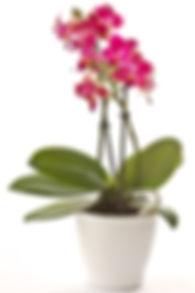 botanica-orchidee.jpg