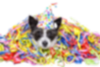 fete-chien_edited.png