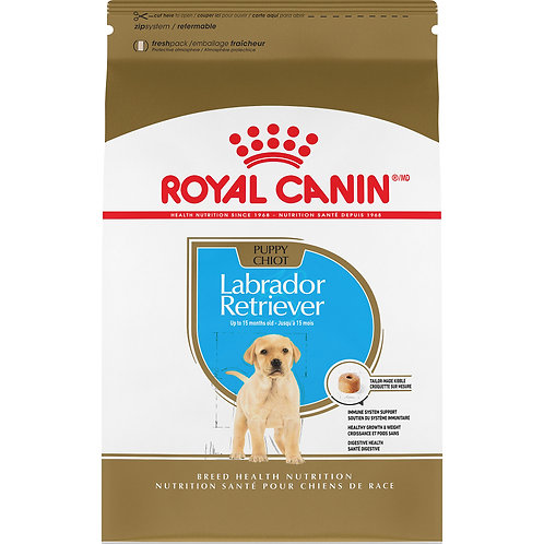 Labrador Retriever Chiot Royal Canin