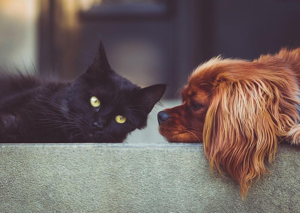 Tiques et puces chez le chat et le chien