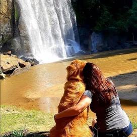 cachorro na cachoeira.png