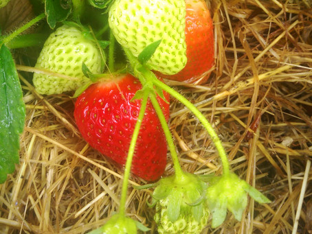 Gardening Jobs for June