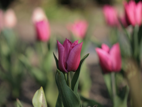 Gardening Jobs for April