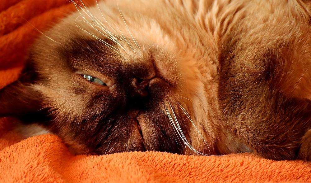 Chat lové sur couverture