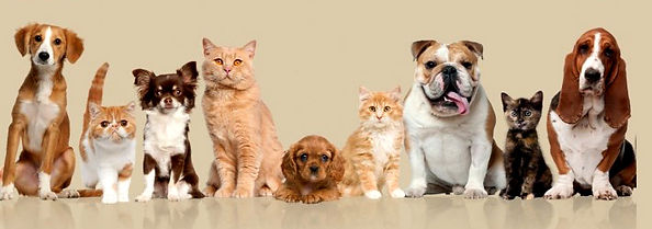 dogs-cats-banner.jpg