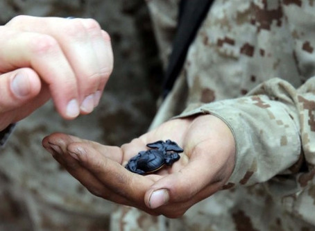 finding translation military terms mean employers
