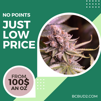 Cheap Weed Sale Surrey Delivery BC Bud.png