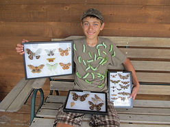 Giant moth collection