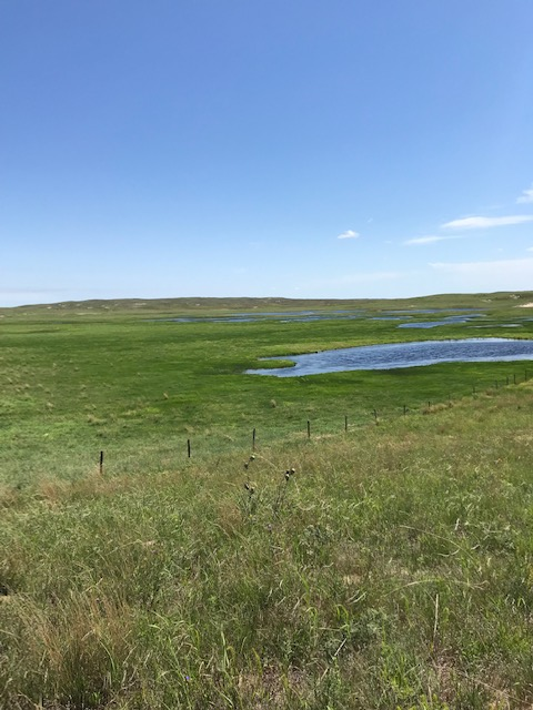 NORTH PASTURE SUB-IRRIGATED