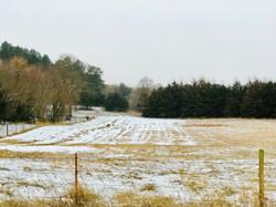 Meadow (2)