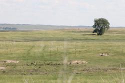 Lacreek Refuge Prairie Dogs
