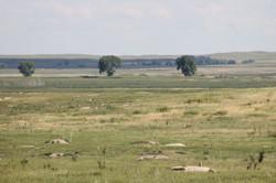Prairie dog town on Lacreek National Wil